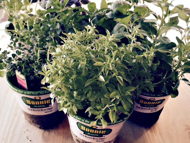 Goodwill tea cup garden- start with herbs