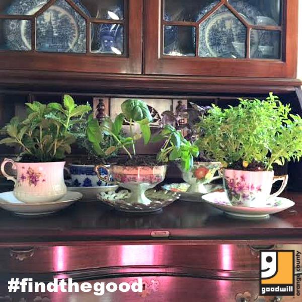 teacup garden display Goodwill findthegood