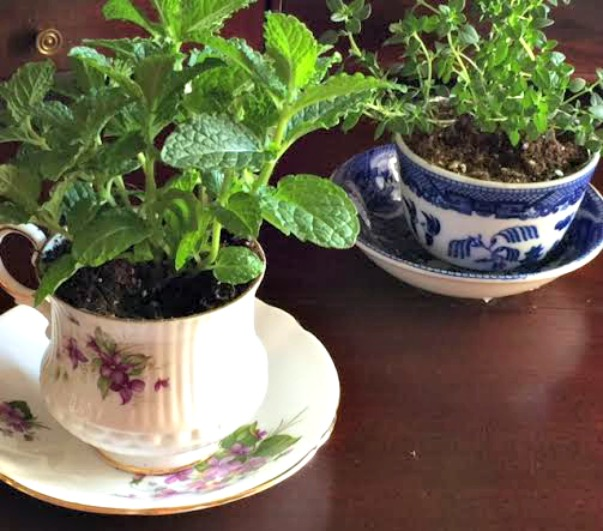 Mother's Day DIY Teacup Herb Garden | Goodwill of Orange County Blog